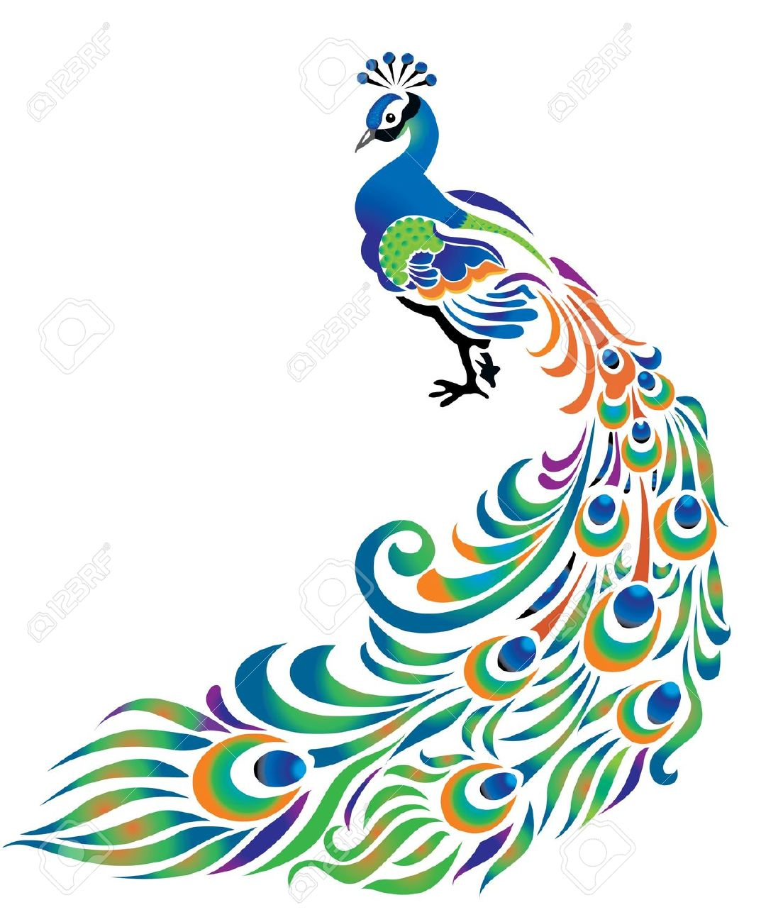 1073x1300 Best Peacock Clipart