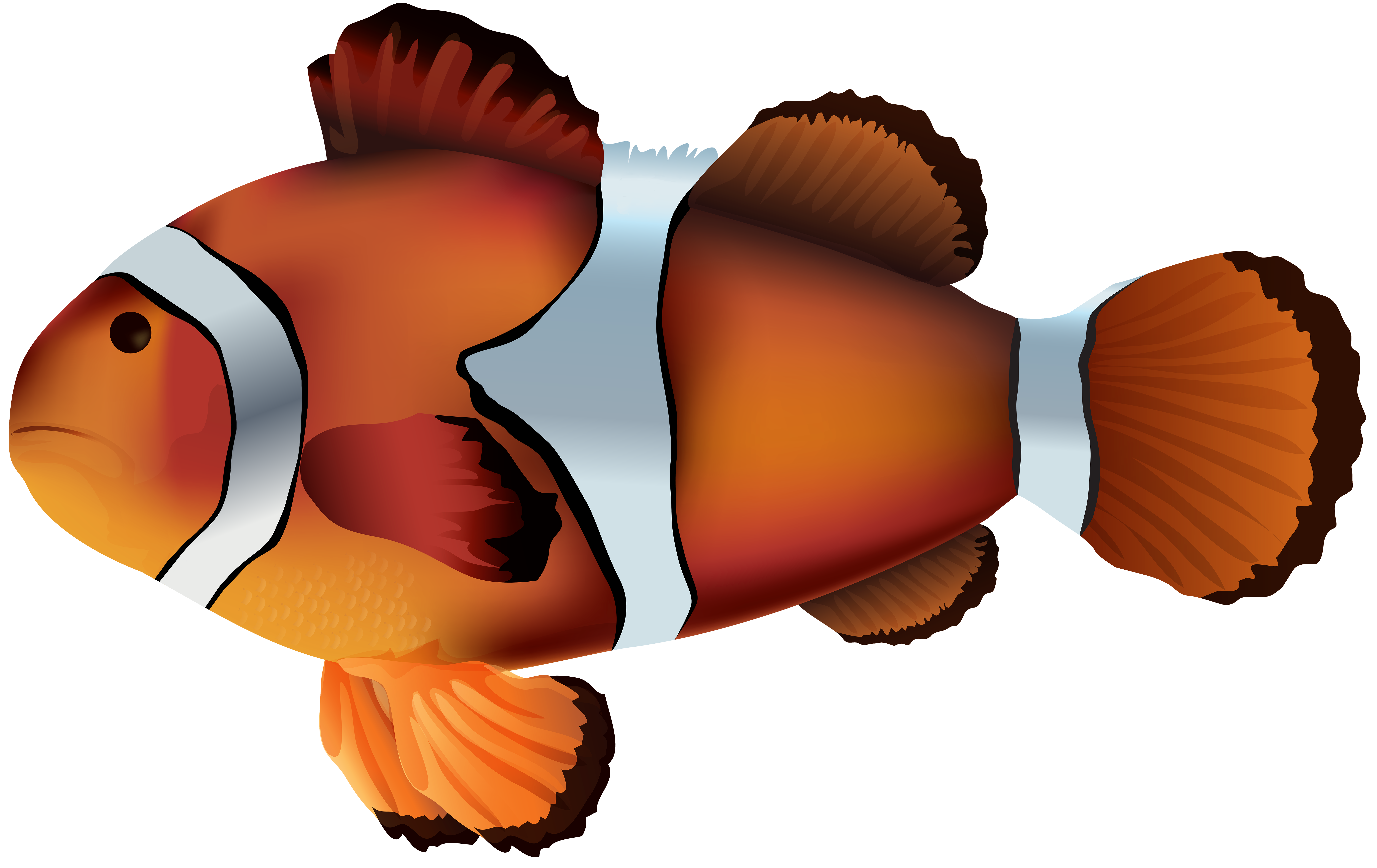 Clown Fish Clipart at GetDrawings.com | Free for personal use Clown ...