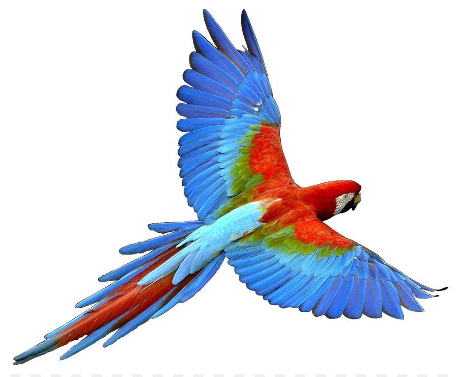 900x740 Parrot Bird Flight Cockatiel Clip Art