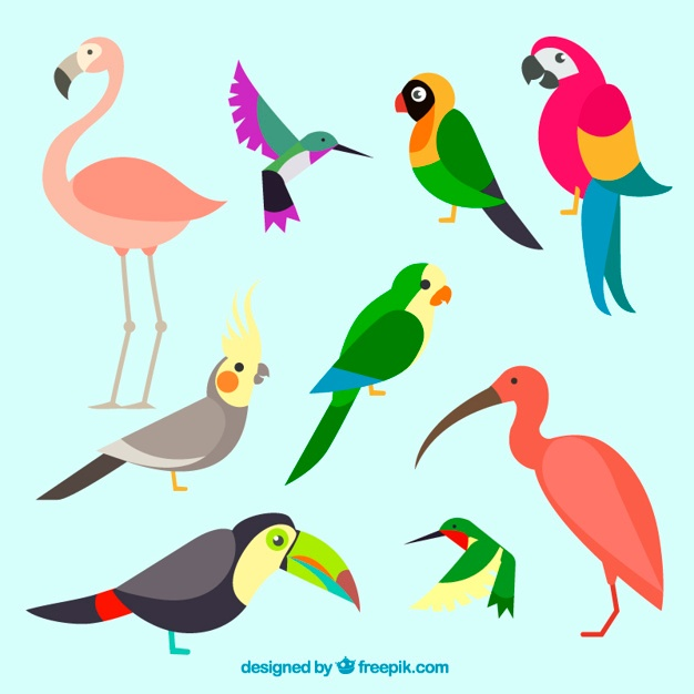 626x626 Parrot Vectors, Photos And Psd Files Free Download