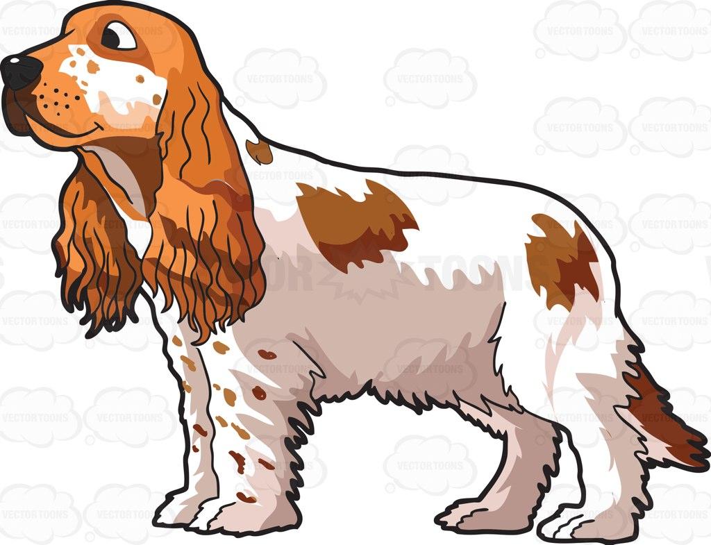 Cocker Spaniel Clipart