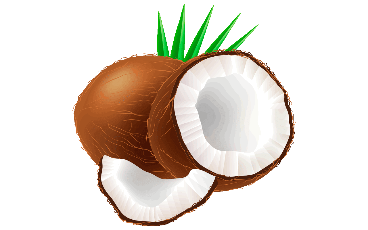 coconut clipart at getdrawings com free for personal use coconut rh getdrawings com coconut clip art free coconut tree clipart