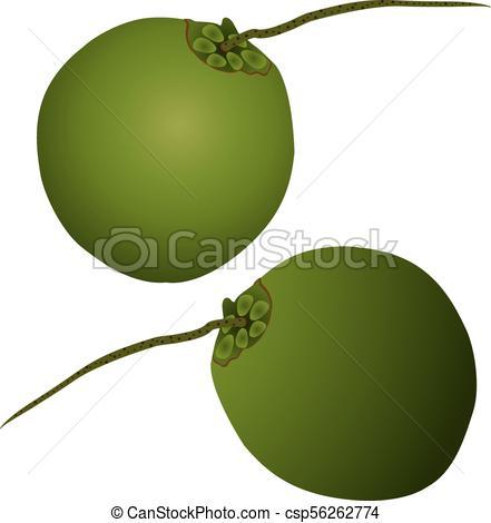 441x470 Coconut Illustration. Coconut Production Copra, Coconut Oil,