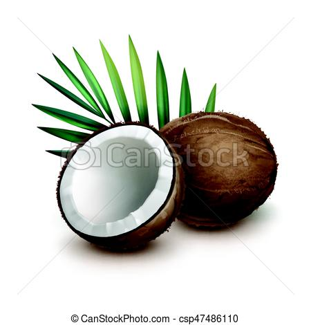 450x470 Vector Brown Whole And Half Coconut With Green Palm Leaf Vector
