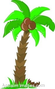 188x300 Clip Art Of A Palm Tree With Coconuts