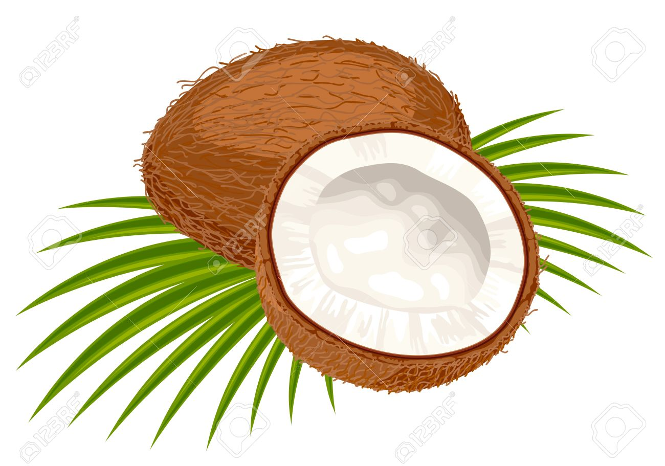 coconut tree clipart at getdrawings com free for personal use rh getdrawings com coconut tree clipart png coconut clipart jpg