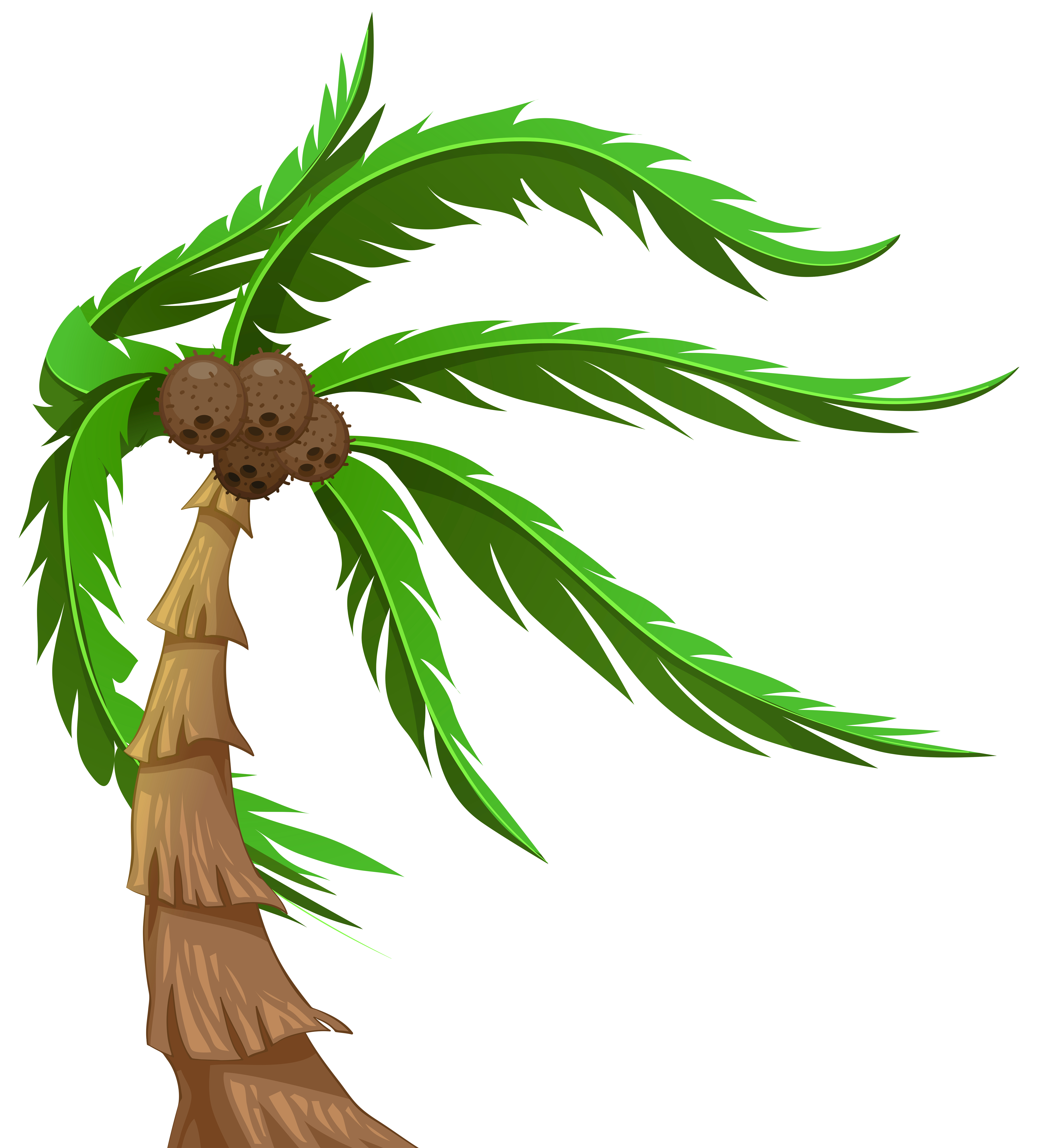 6412x7000 Palm With Coconuts Transparent Png Clip Art Imageu200b Gallery