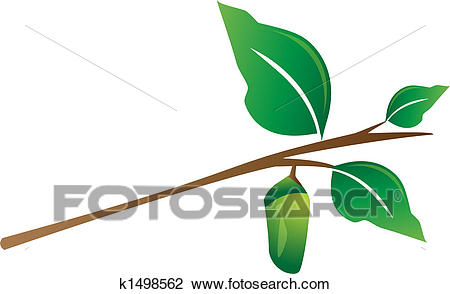 450x294 Cocoon Clipart Clipart Of Cocoon Hanging From Tree Branch K1498562
