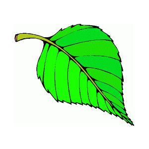 300x300 Leaf Clip Art All Types Of Leaf Clip Art Images Preschool