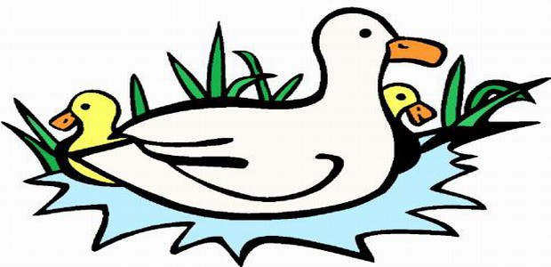 620x300 Duck Coloring Pages