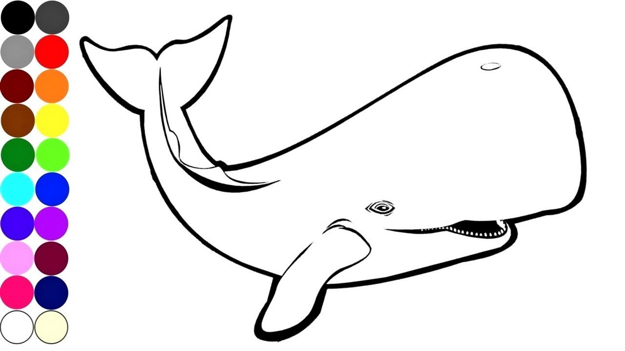 1280x720 How To Draw And Coloring A Whale Colouring And Drawing Pages