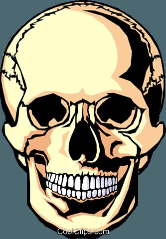 333x480 Human Skull Royalty Free Vector Clip Art Illustration Medi0102