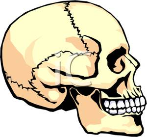 300x279 Clip Art Image The Side Of A Human Skull