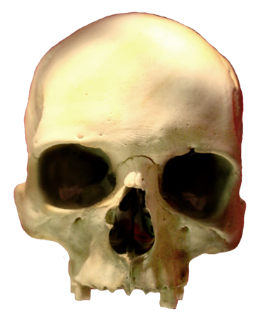 360x443 Cool Skull Clip Art (And Funny!)