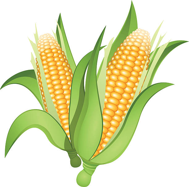 612x605 Corn Clipart Angry 3188172