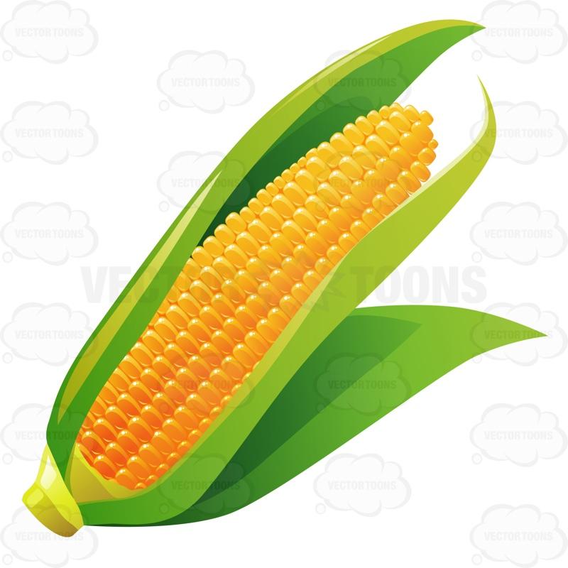 800x800 Corn Leaves Clip Art