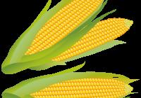 200x140 Corn Clipart Corn Clipart Corn Clip Art Vector Clip Art Online