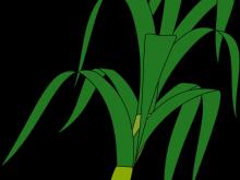 220x165 Corn Plant Clipart Corn Plant Png Clipart Stickers Png Mens Hair