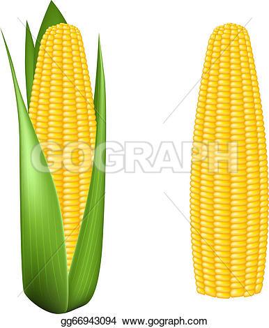 386x470 Corn Cob Clip Art Clipart
