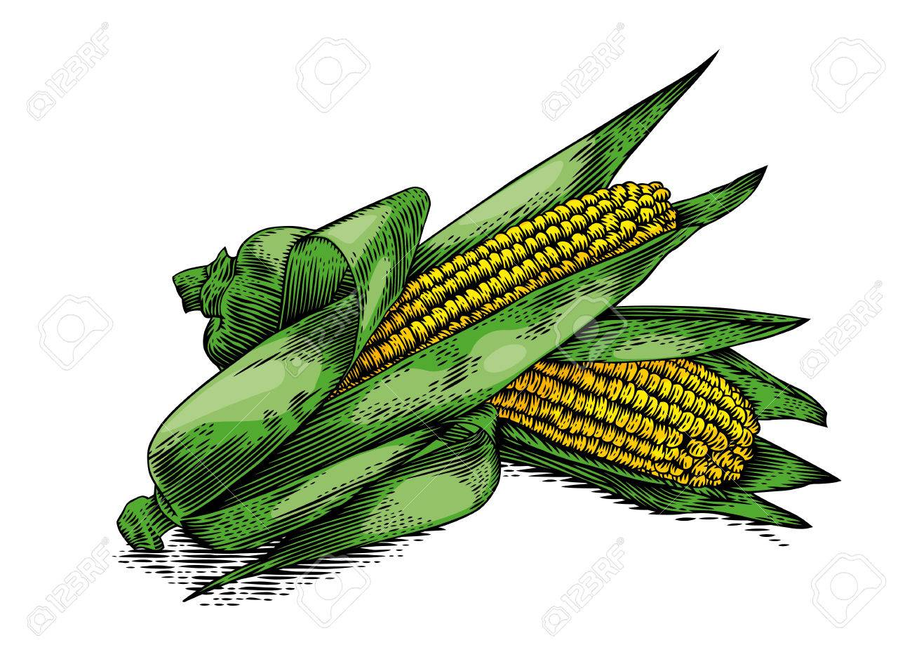 1300x919 Collection Of Corn Leaves Drawing High Quality, Free