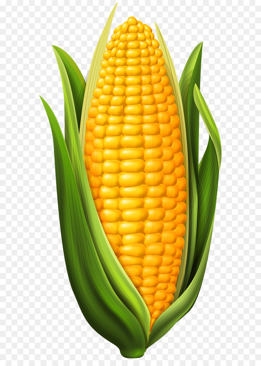 900x1260 Corn On The Cob Maize Clip Art