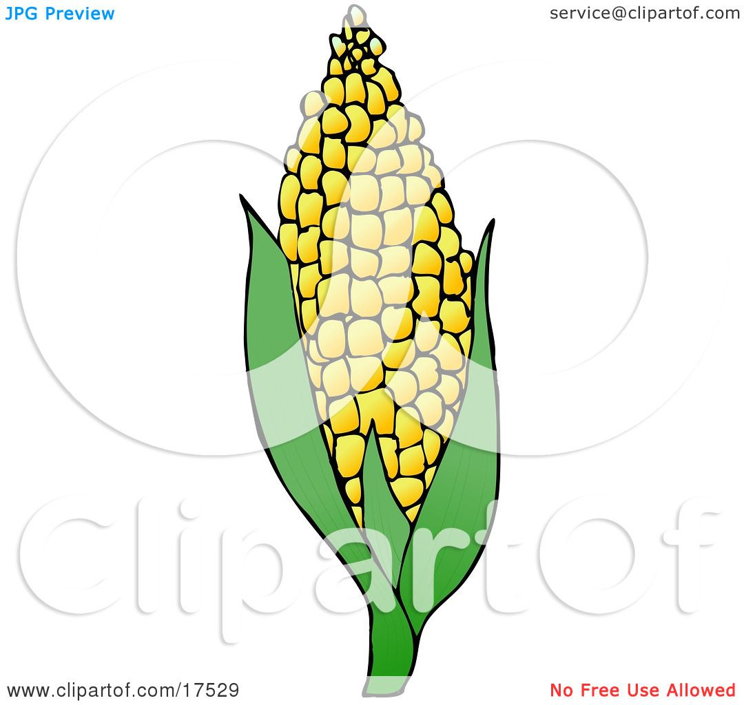 1080x1024 Royalty Free Clipart Of Sweet Yellow Corn On The Cob By Djart