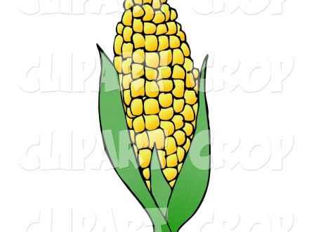 440x330 Corn Plant Clip Art Corn Stalk, Corn Plant Clip Art