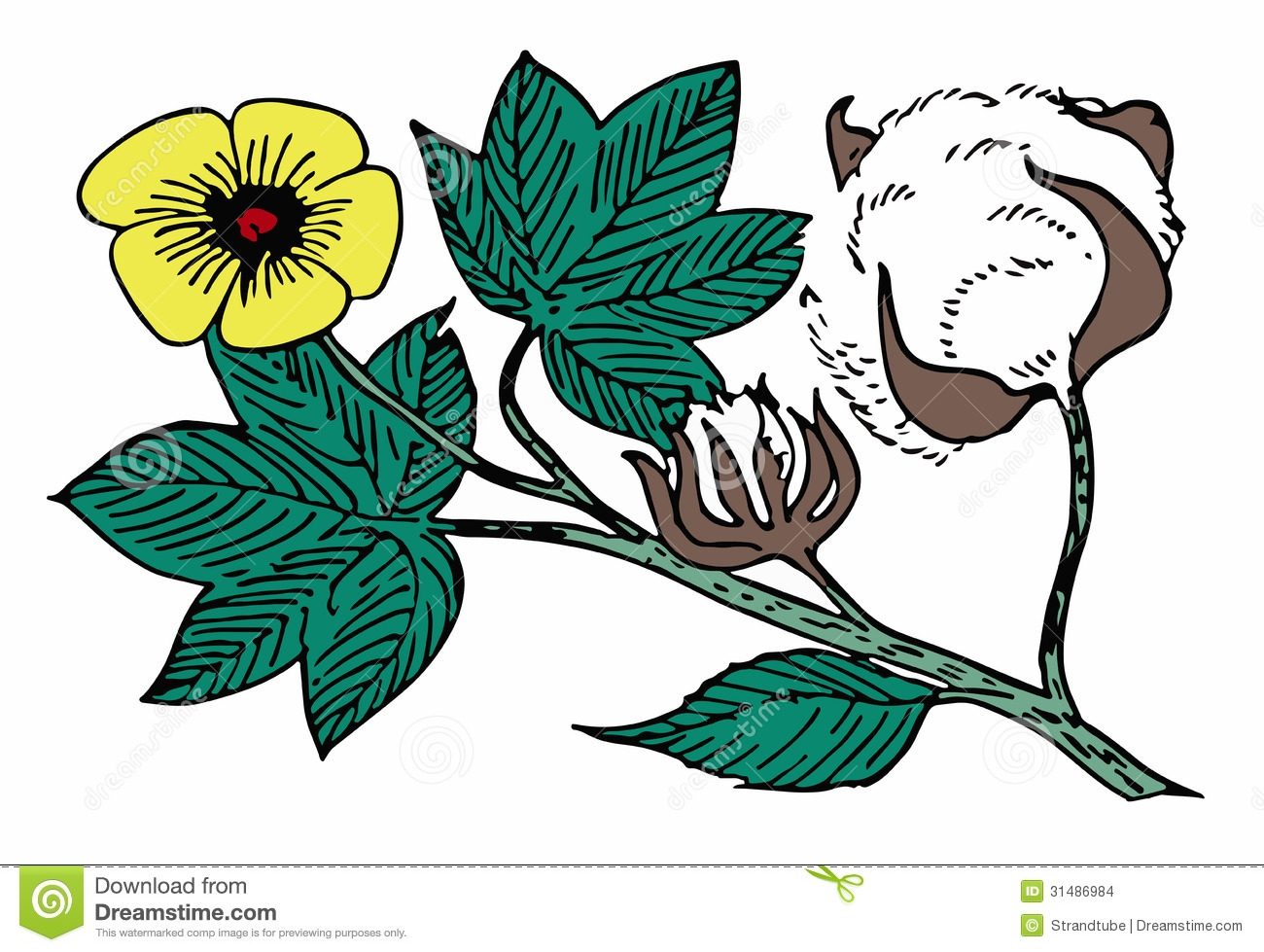 cotton clipart at getdrawings com free for personal use cotton rh getdrawings com clipart coton cotton clipart panda