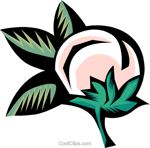 480x475 Cotton Plant Royalty Free Vector Clip Art Illustration Vc001602