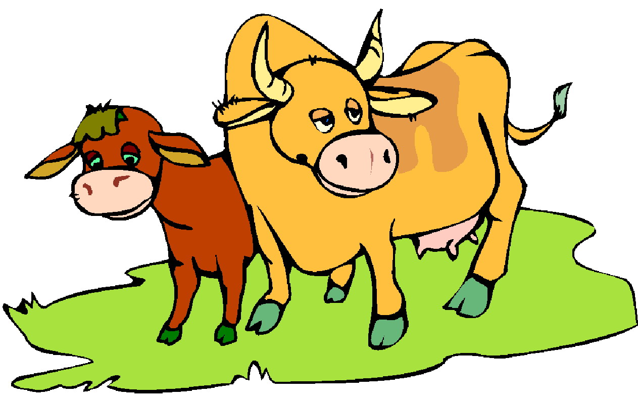 1263x791 Cattle Cures By Barb Luther An Extraordinary Approach To Animal
