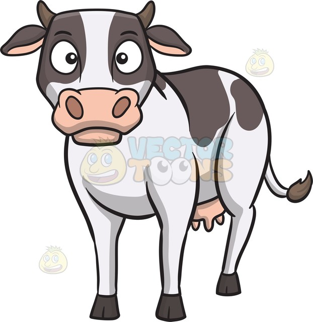 622x640 An Intrigued Cow Cartoon Clipart Vector Toons
