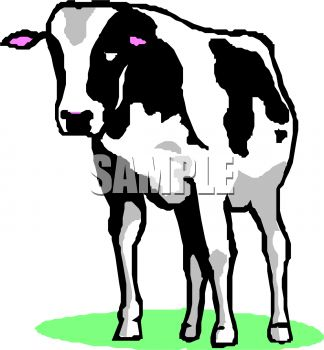 324x350 Picture Of A Black And White Cow Standing In Grass In A Vector