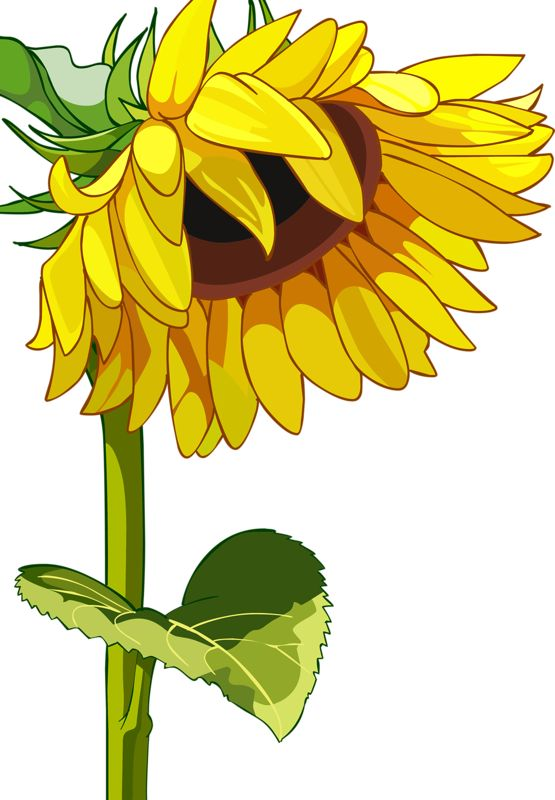 555x800 360 Best Flowers Images On Stencil, Flower Drawings