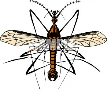 350x295 Mosquito Hawk Or Crane Fly