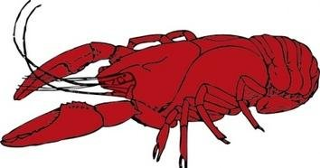 354x186 Crayfish Clipart Crawfish 3198445