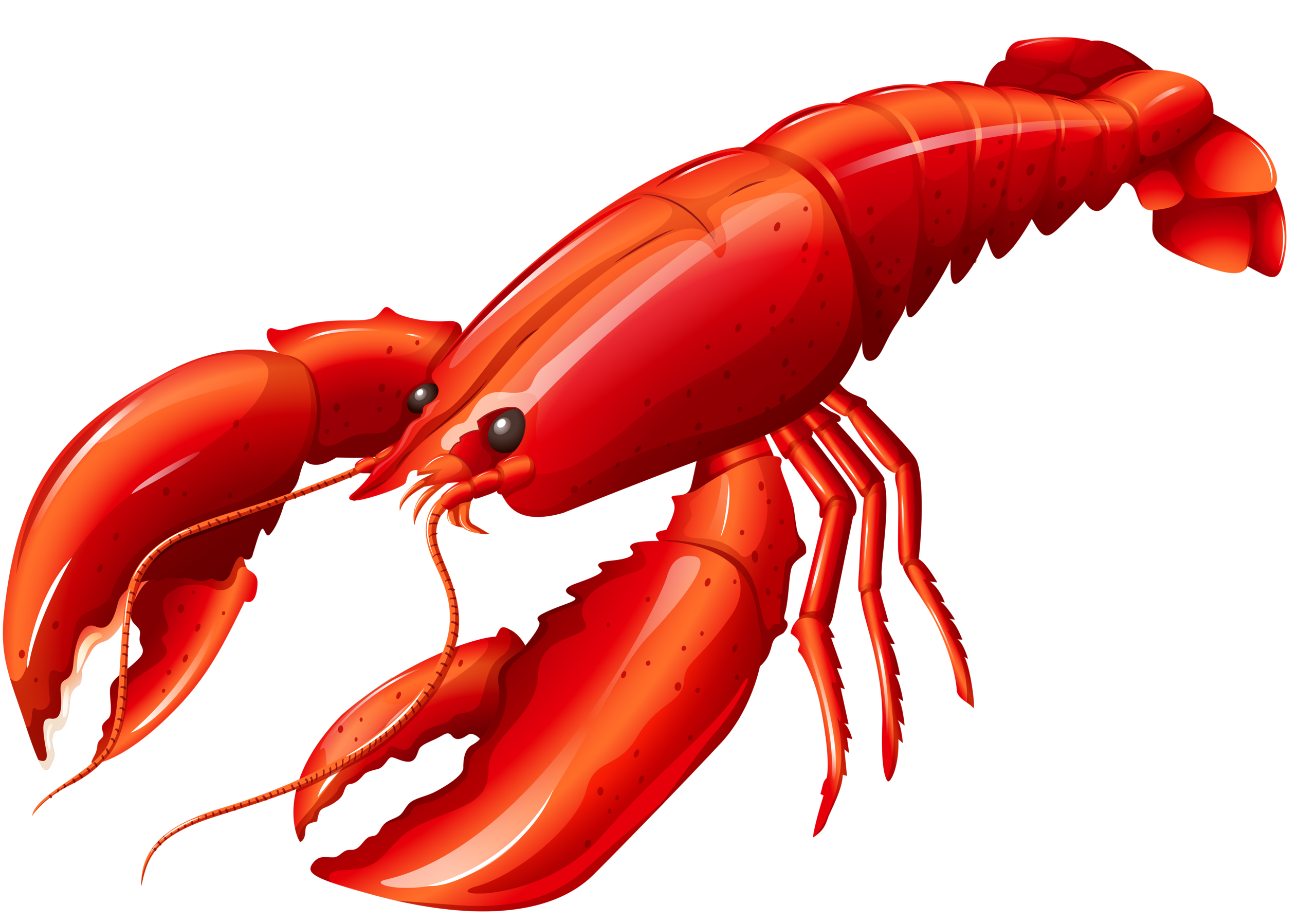 2560x1793 Collection Of Lobster Clipart Png High Quality, Free
