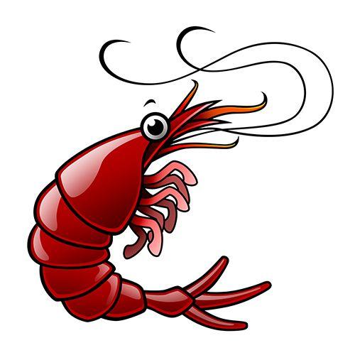 500x500 Shrimp Boil Cliparts Free Download Clip Art