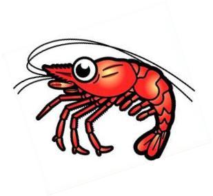 309x284 Shrimps Clipart