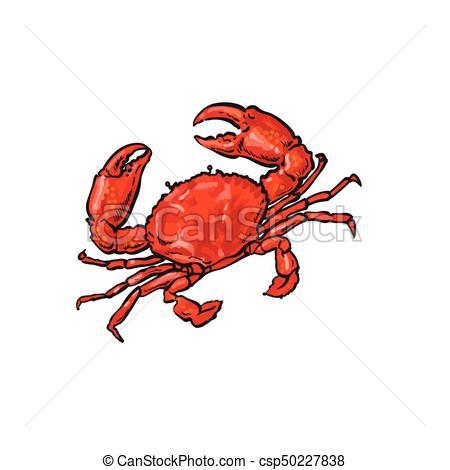 450x470 Vector Sketch Cartoon Sea Crayfish Crab Isolated. Vector