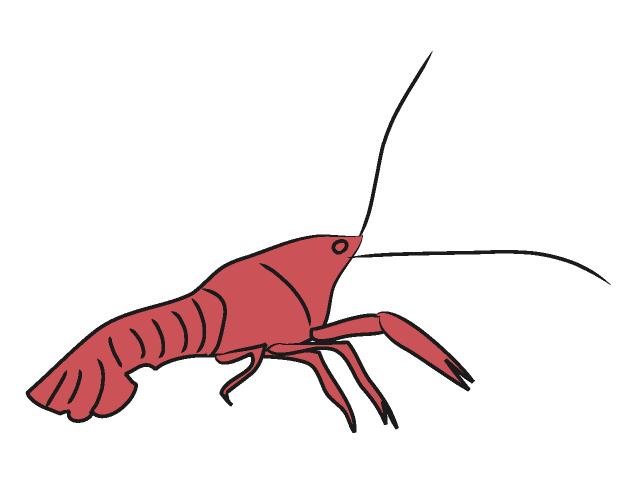 640x480 Crayfish Clip Art Animals Illustration Free Material