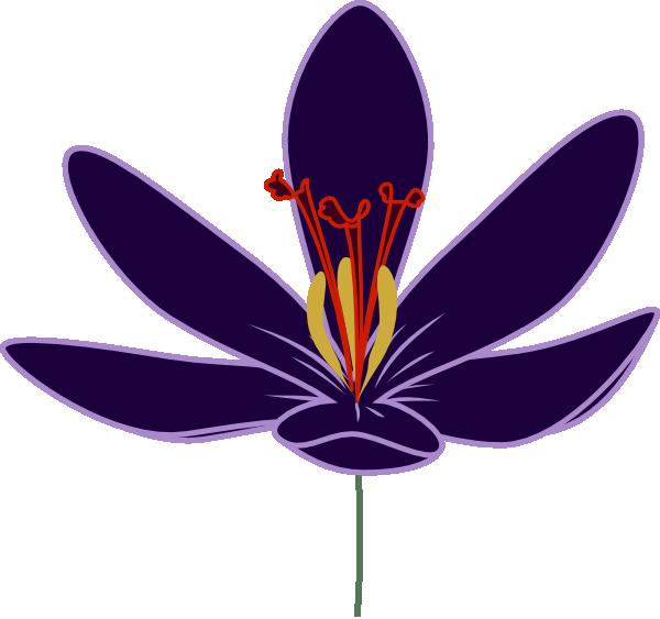 600x563 Purple Crocus Blossom Clip Art