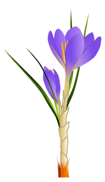 346x600 Spring Crocus Png Clipart Picture