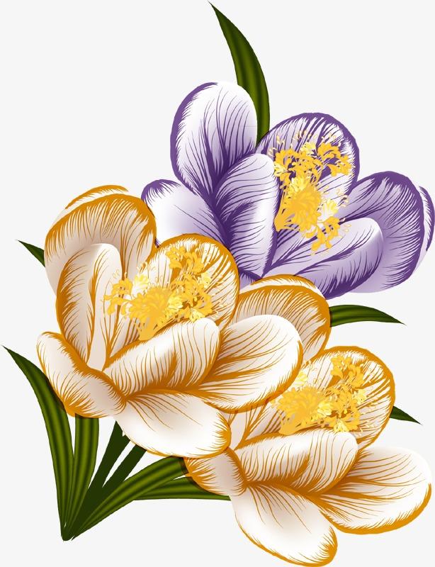614x800 Crocus Bouquet, Bouquet, Saffron, Flowers Png Image And Clipart