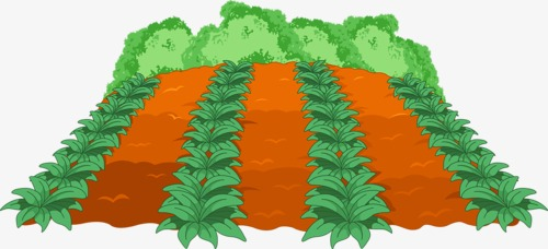 500x228 Field, Crop, Cartoon Vegetables, Crops Png Image And Clipart