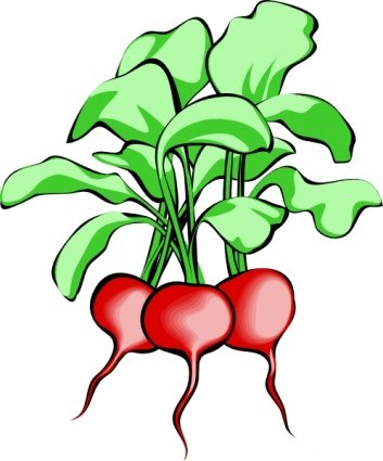 353x425 Free Root Crop Clipart And Vector Graphics