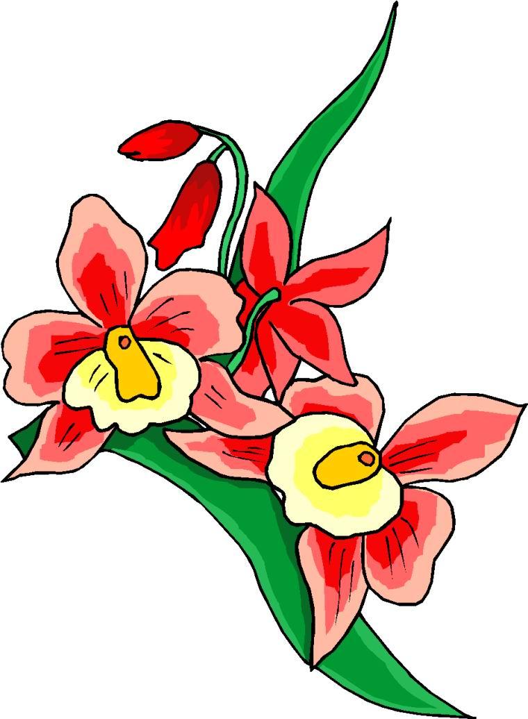 760x1035 Nice Flower Images Flower Clip Art