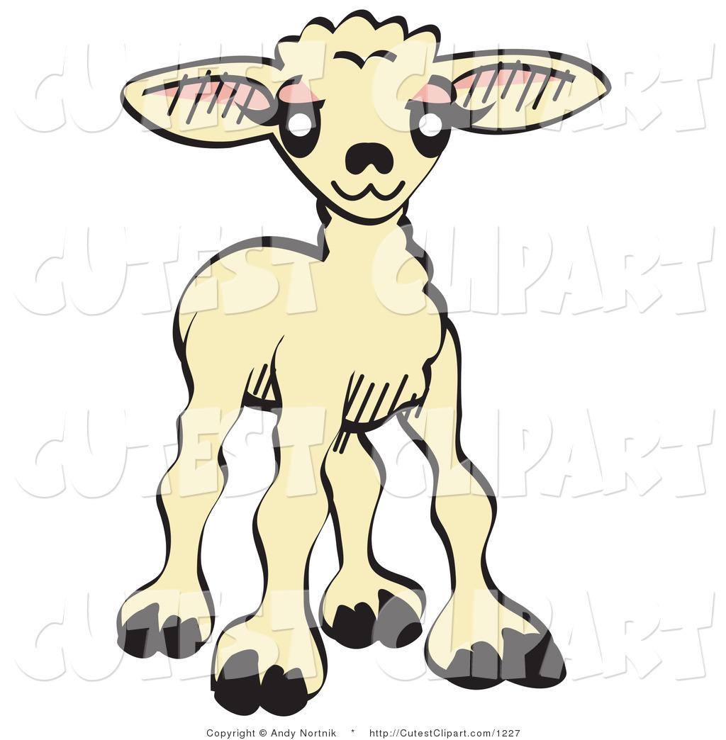 1024x1044 Royalty Free Lamb Stock Cute Designs