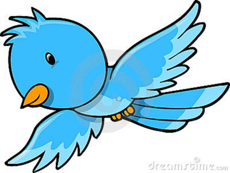 800x602 Bluebird Clipart Bird Fly