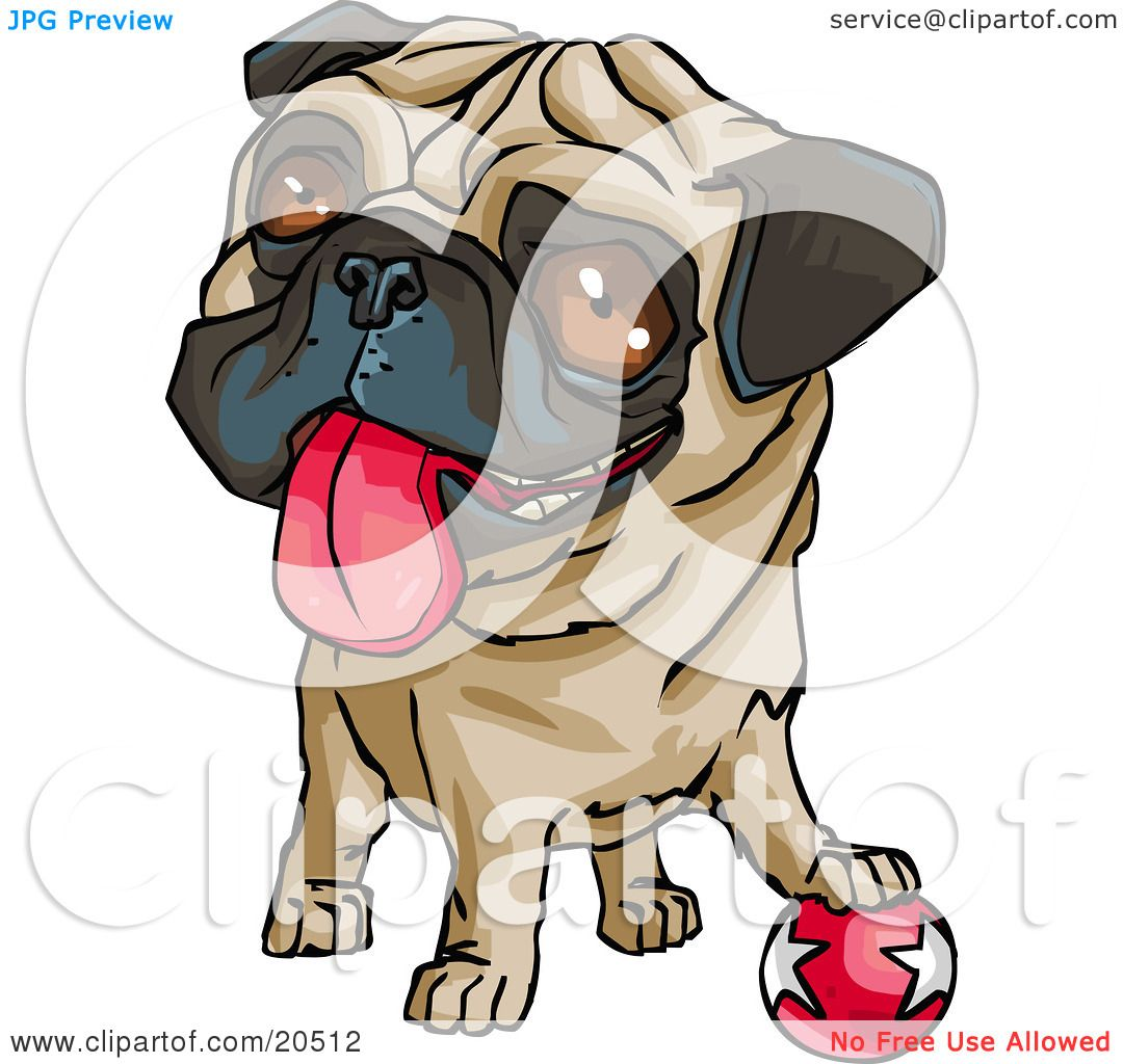 1080x1024 Clipart Illustration Of A Cute Brown Eyed Pug Dog Hanging His