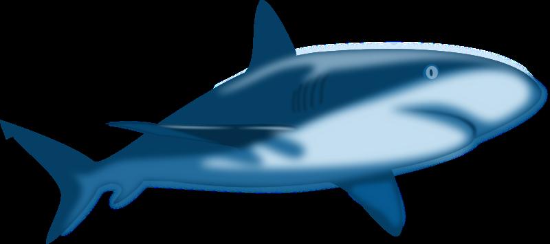 800x355 Cute Shark Clipart